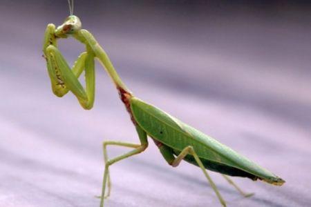 الهام از حشرات برای ساخت سمعک های پیشرفته