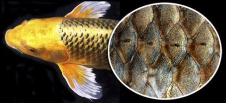 اخبارعلمی,خبرهای علمی,ماهی