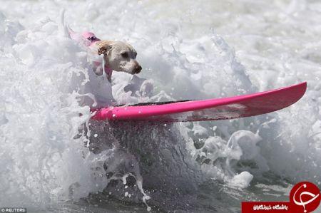 اخبارگوناگون,خبرهای گوناگون,موج سواری سگها