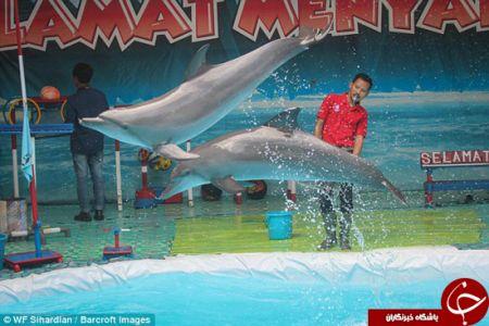 اخبارگوناگون,خبرهای گوناگون,دلفین