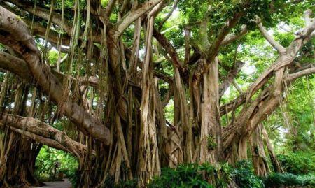 اخبار علمی,خبرهای  علمی,بزرگترین درخت مصنوعی