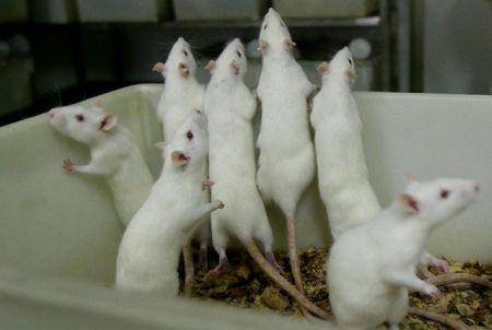 اخباررپزشکی ,خبرهای  پزشکی,تخمک موش