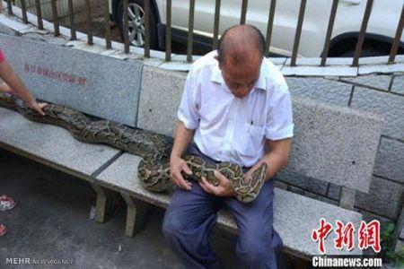 اخبار,اخبارگوناگون,حیوان خانگی یک خانواده چینی