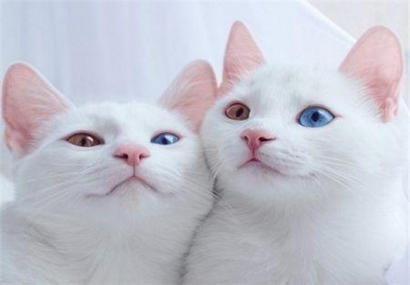 اخبارگوناگون,خبرهای گوناگون,گربههای دوقلو