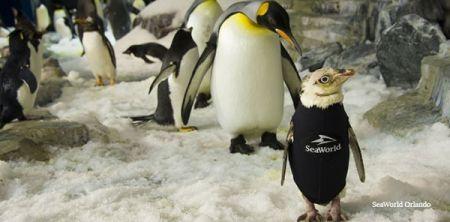 اخبا علمی ,خبرهای   علمی ,پنگوئن