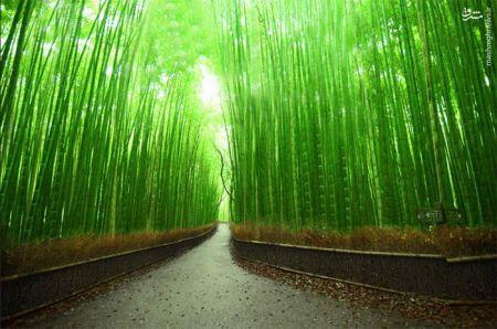 اخبارتصاویر,خبرهای تصاویر,ژاپن