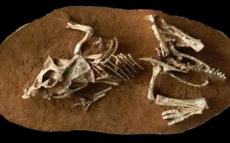 اخبار علمی ,خبرهای  علمی, انقراض دایناسورها