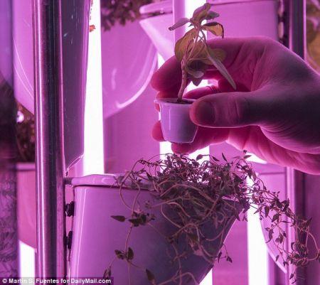 اخبارعلمی  ,خبرهای  علمی ,پرورش سبزیجات
