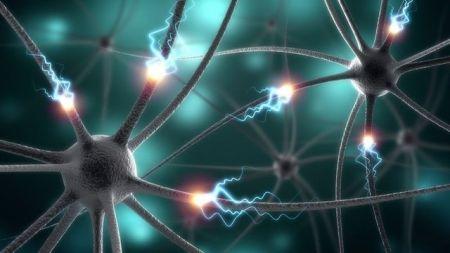 اخبارعلمی,خبرهای علمی,سلولهای مغز