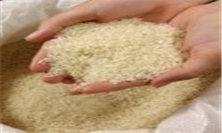 توزیع 40 هزار تن برنج برای تنظیم بازار شب عید/ برنج هندی کیلویی 3800 تومان