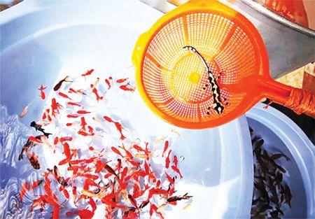 فروش سمندر کمیاب و در معرض انقراض لرستانی، در تنگ ماهی شب عید