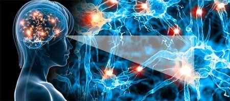 اخبارعلمی ,خبرهای  علمی, ساخت قویترین مغز