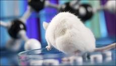 اخبارعلمی ,خبرهای علمی , موش