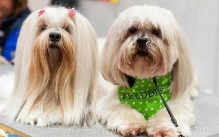 عکسهای جالب,عکسهای جذاب,نمایش سگ های خانگی