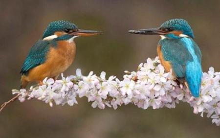 عکسهای جالب,تصاویر دیدنی،پرنده