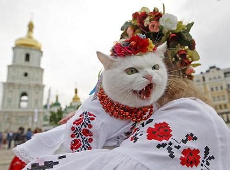 تصاویر دیدنی,تصاویر جالب,گربه
