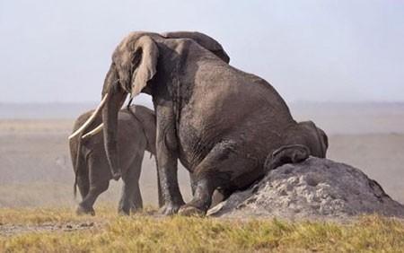 عکسهای جالب,عکسهای جذاب,فیل