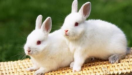 عکسهای جذاب,تصاویر دیدنی,خرگوش