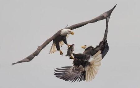 عکسهای جالب,عکسهای جذاب,عقاب