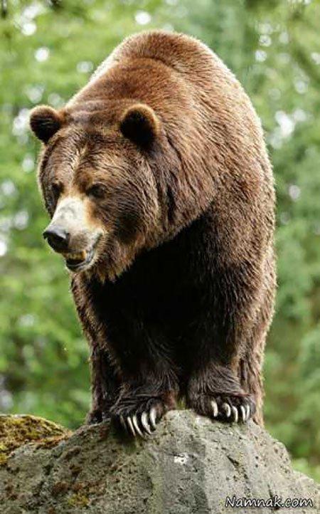 عکسهای جالب,تصاویر جالب,خرس