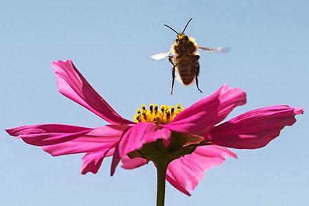 عکسهای جالب,عکسهای جذاب,سرزمین زنبور عسل در آلمان