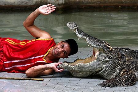 عکسهای جذاب,تصاویر دیدنی,تمساح