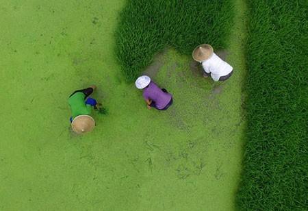 عکسهای جالب,عکسهای جذاب,چین