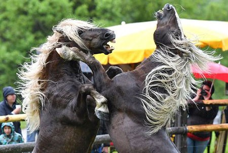 تصاویر دیدنی,تصاویر جالب,اسب