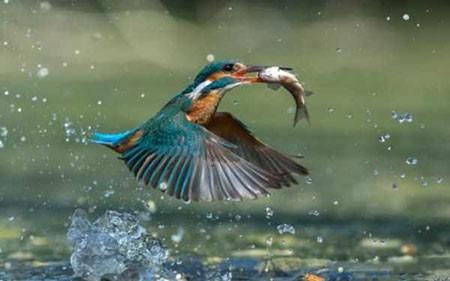 عکسهای جالب,تصاویر جالب