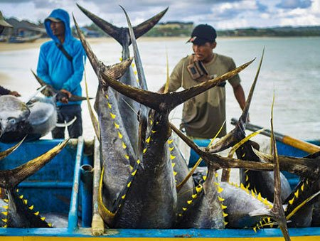 عکسهای جالب,تصاویر دیدنی,صید ماهی