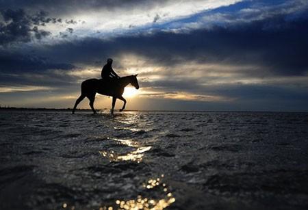عکسهای جالب,عکسهای جذاب,اسب سواری