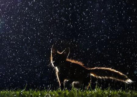 عکسهای جالب,تصاویر جالب,روباه