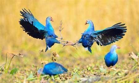 عکسهای جالب,تصاویر دیدنی, پرنده