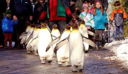 عکسهای جذاب,تصاویر دیدنی,پنگوئن