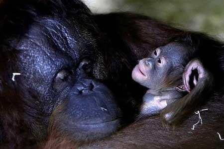 عکسهای جذاب,تصاویر دیدنی,میمون