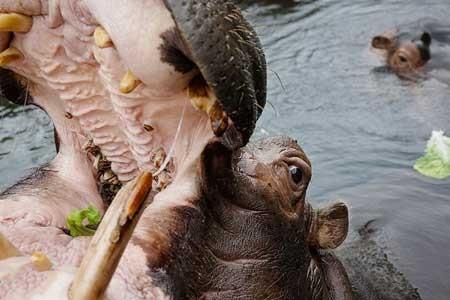 عکسهای جالب,عکسهای جذاب, تمساح