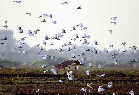 عکسهای جالب,عکسهای جذاب, پرندگان