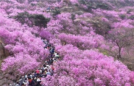 تصاویر دیدنی,تصاویر جالب,شکوفه های زیبا