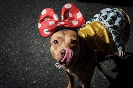 عکسهای جالب,تصاویر جالب, سگ