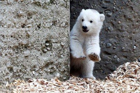 عکسهای جالب,عکسهای جذاب,خرس قطبی