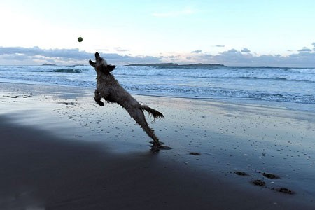 عکسهای جالب,عکسهای جذاب,سگ