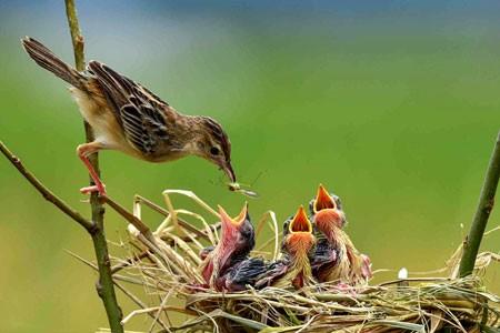 عکسهای جالب,تصاویر دیدنی, پرندگان