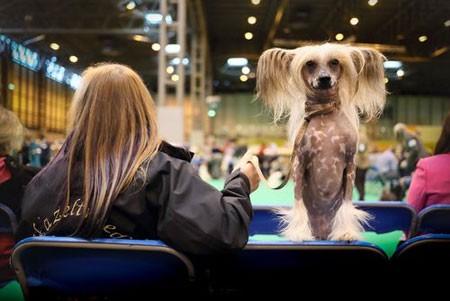 عکسهای جالب,تصاویر جالب,سگ های خانگی
