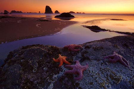 عکسهای جالب,عکسهای جذاب,ستاره های دریایی