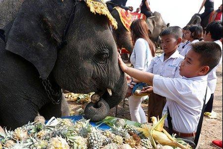 عکسهای جالب,تصاویر دیدنی,روز ملی فیل