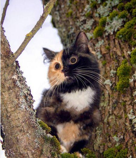 اخبار,اخبار گوناگون, خوش ترکیب ترین گربه ای که تاکنون دیده اید