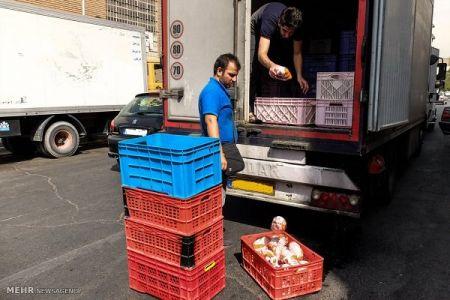 قیمت مرغ به ۸۴۰۰ تومان رسید