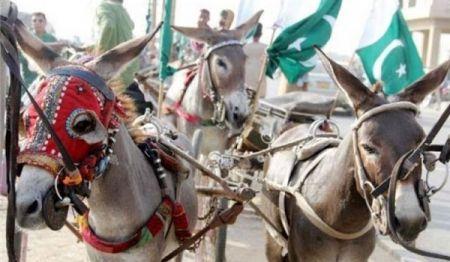 اخبارگوناگون,خبرهای  گوناگون ,الاغهای پاکستانی
