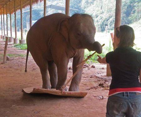 اخبارعلمی ,خبرهای علمی,فیلها