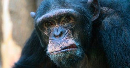 اخبار,اخبار گوناگون,۱۰ شیوه باور نکردنی که انسان ها توسط حیوانات کشته شده اند.